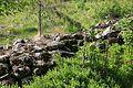 Foto fra naturstien ved Buråstjernet i Hurdal 26.jpg