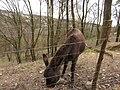Francheville (Rhône) - Un âne mangeant (mars 2019).jpg