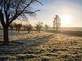 Frosty Dawn (11904717333).jpg