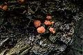 Fungus Zwam (14711203932).jpg