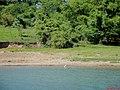 Garça branca (Casmerodius alba) na margem do Rio Tietê - panoramio.jpg
