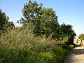 Garden Way - Wall - trees - streamlet - 17 Shahrivar st - Nishapur 33.JPG