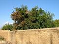 Garden Way - Wall - trees - streamlet - 17 Shahrivar st - Nishapur 36.JPG