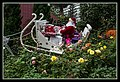 Gardens by the Marina Bay - Dome Flowers-11 (8322735345).jpg