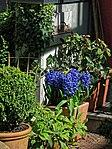 Garten im Innenhof des Valentinhauses 18.jpg