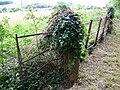 Gatepost and ivy near Knook - geograph.org.uk - 1479143.jpg