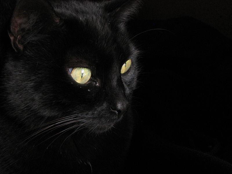 Imagen:Gato negro.JPG
