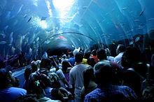 real underwater train. Underwater Tunnels[edit] Real Train