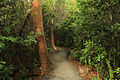 Gfp-florida-everglades-national-park-forest-path.jpg