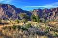 Gfp-texas-big-bend-national-park-closer-look-at-the-basin.jpg