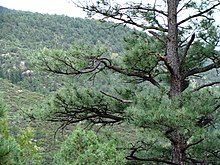 Gila Natl Forest Nima3.JPG