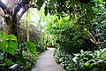 Glass house view - Brooklyn Botanic Garden - Brooklyn, NY - DSC08177.JPG