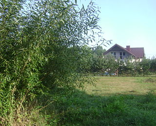 Dobiesz Village in Masovian, Poland