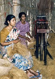 Production of sisal in Goa (Salcete)
