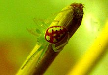 Gold green red spider.jpg