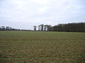 Good Friday Plantation, East Raynham, Norfolk - geograph.org.uk - 123692.jpg