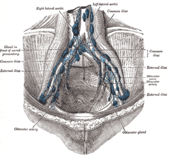 Paraaortic lymph nodes - Image: Gray 611