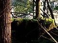 Green Carpet - panoramio.jpg