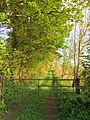 Green lane beside Nursery Plantation - May 2012 - panoramio.jpg