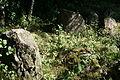 Großsteingrab Holzhausener Kellersteine 2 11.JPG