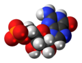 Guanosine-monophosphate-anion-3D-spacefill.png