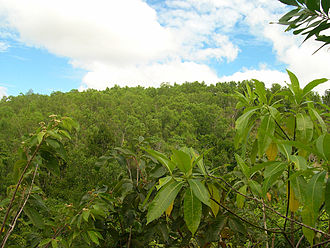 Guimaras - Guimaras greenery
