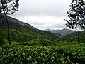 Gundumalai, Munnar - panoramio (1).jpg