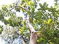 HK CWB 銅鑼灣 Causeway Bay 維多利亞公園 Victoria Park tree trunk n green leaves December 2019 SSG 28.jpg