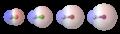 HX-polarity-montage-3D-balls-horizontal.png