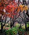 Hagley Park New Zealand. (12963289064).jpg