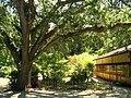 Hakone Gardens, Saratoga, CA - IMG 9133.JPG