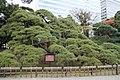 Hama-rikyū Garden 20181124-2.jpg