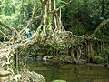 Hanging root bridge shillong.jpg