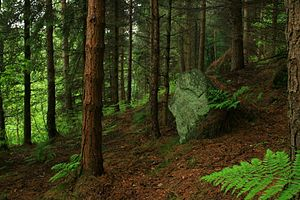 Hardcastle Crags - Image: Hardcastle Crags 1