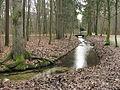 Hartmannshofer Wald GO-1.jpg
