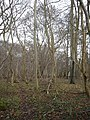 Hatts Coppice - geograph.org.uk - 299811.jpg