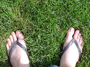 Havaianas - A pair of black Havaianas Top being worn
