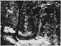 Heavily wooded area. Typical of HDC - NARA - 299685.jpg