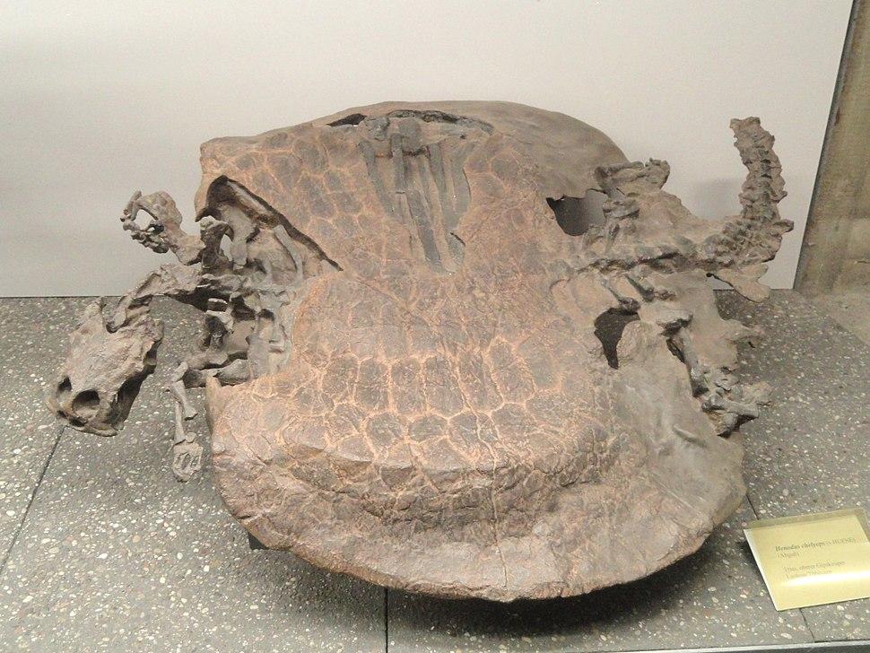 Henodus chelyops - Naturmuseum Senckenberg - DSC02191