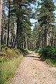High Glen Plantation - geograph.org.uk - 205086.jpg