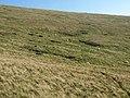 Hillside below Cribyn - geograph.org.uk - 2631983.jpg