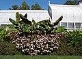 Hillwood Gardens in September (21669475521).jpg