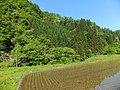 Hitokasumi, Tsuruoka, Yamagata Prefecture 999-7203, Japan - panoramio.jpg