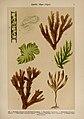 Hoffmann-Dennert botanischer Bilderatlas (Taf. 01) (6424979729).jpg
