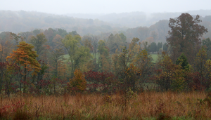 Hoosier National Forest - Forested hills in Orange County near Patoka Lake