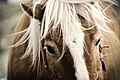 Horse (138128685).jpeg