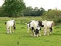 Horses - geograph.org.uk - 481445.jpg