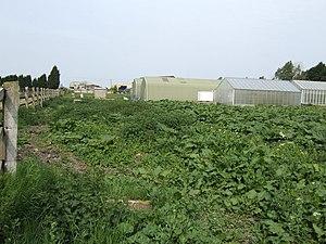 HM Prison Swaleside - Horticultural unit at HMP Swaleside