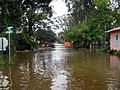 Hurricane Ike - Old Mandeville (6).jpg
