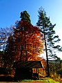 Hut In Autumn - panoramio.jpg